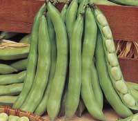 broad-beans.jpg